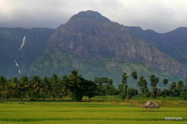 western ghats paddy field