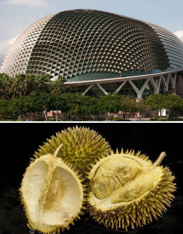 durian-singapore_3
