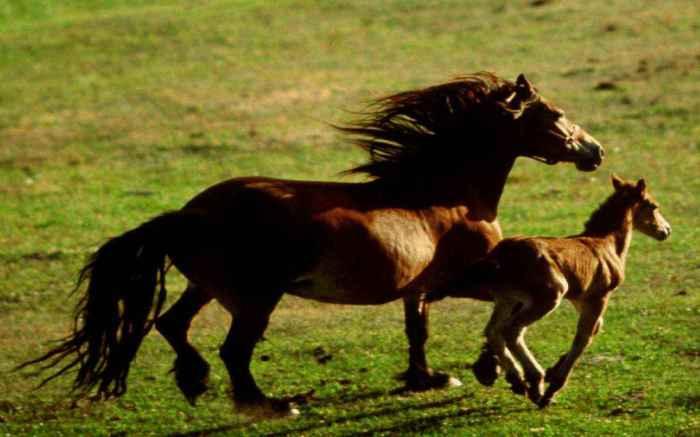 horses-mom-an-baby