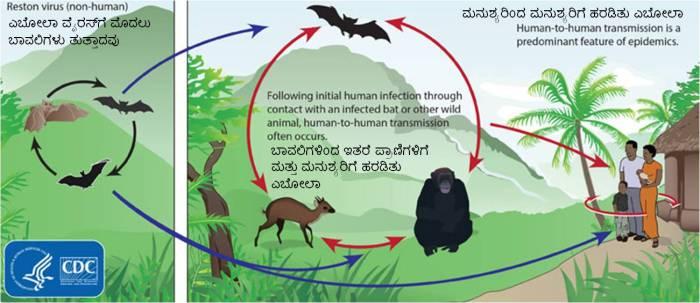 Ebola_Cycle