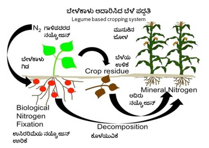 nitrogen-fixation-2