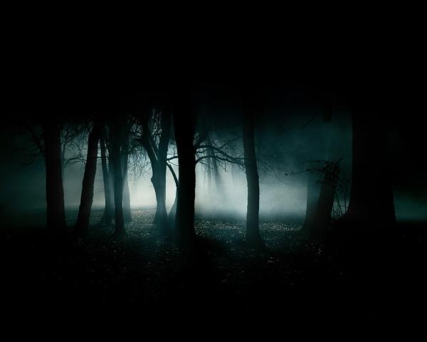 Dark-Forest-35836-240944