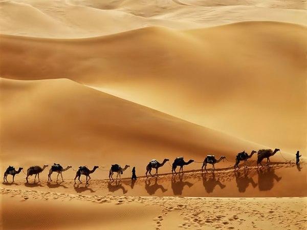 arabia-desert