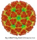 chikungunya titta 1