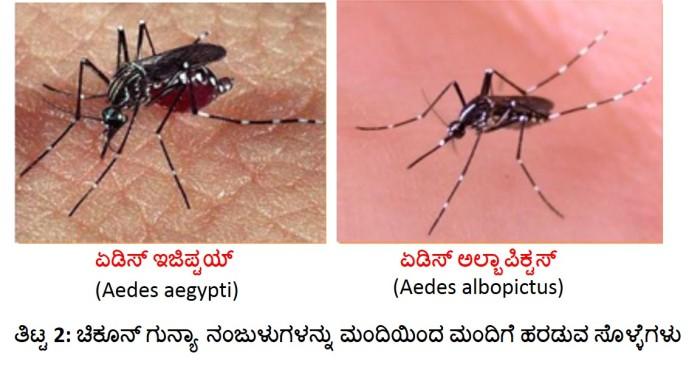 chikungunya titta 2