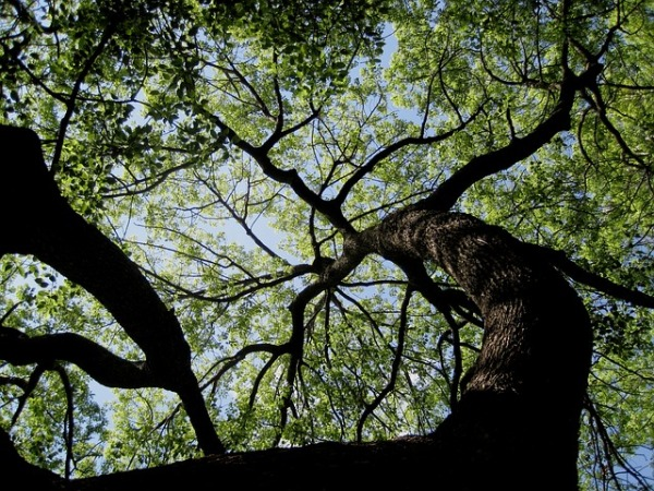 tree-189909_640