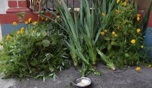 ಲಕ್ಕೆ ಹಾಕಲು ಬಳಸುವ ಗಿಡಗಳನ್ನು ಪೂಜೆ ಮಾಡುತ್ತಿರುವುದು