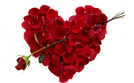 valentines-day-rose
